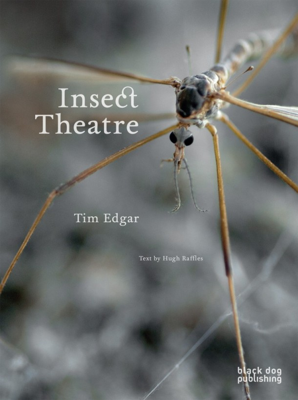 Insect-Theatre-Tim-Edgar-762x1024