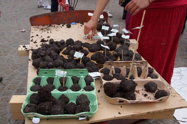Source: http://en.wikipedia.org/wiki/File:Seed_Bombs_for_Monsanto.jpg