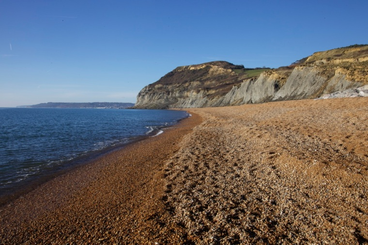 Seatown shingle